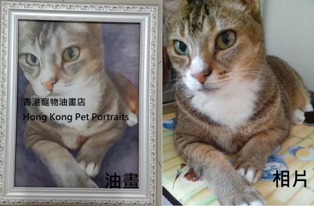 compare brown cat.2