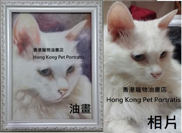 compare white cat 1.1